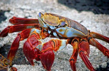 Galapagos Islands Best Pla