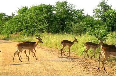 Kruger National Park Best Places To Visit