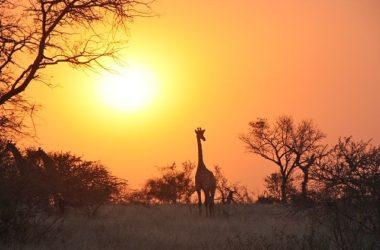https://greenbookglobal.com/listing/best-places-n-lusaka/