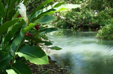Portland Jamaica Best Places To Visit